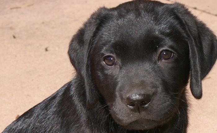 Puppy #2: Yuli