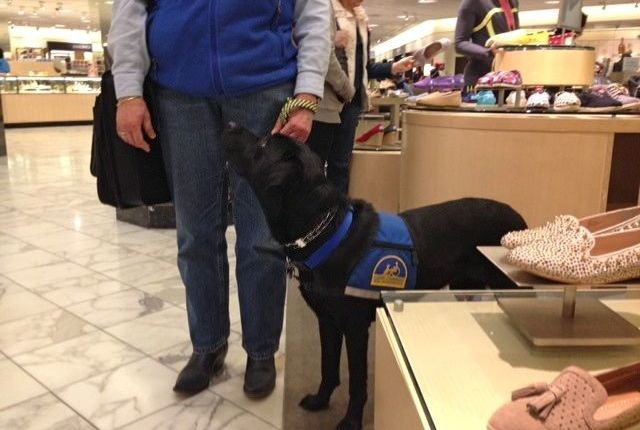 CCI dogs shopping