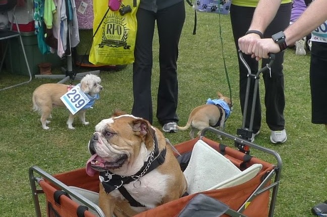 At the dog festival