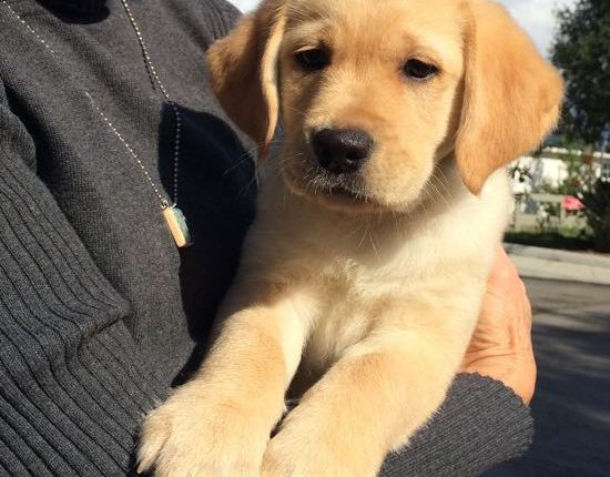 A new puppy forChristmas!