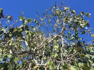 091815 Leaves1