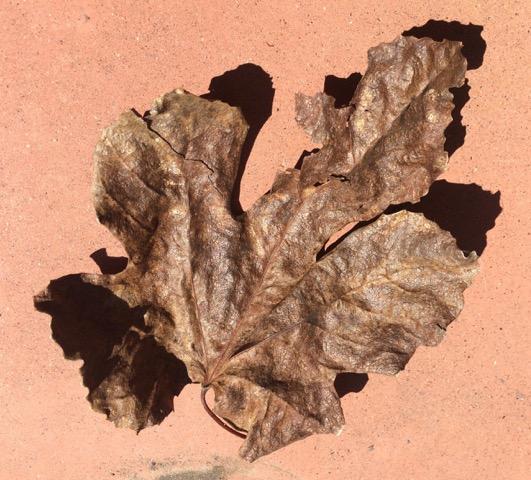 091815 Leaves3
