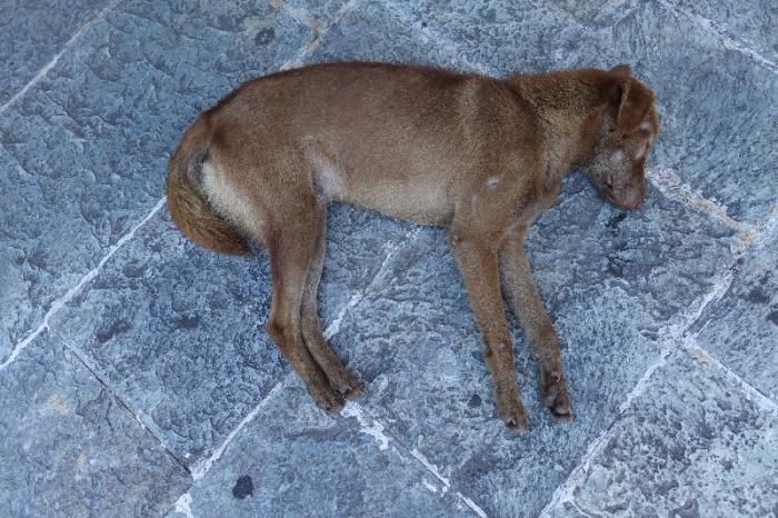 101415 Dead dog1