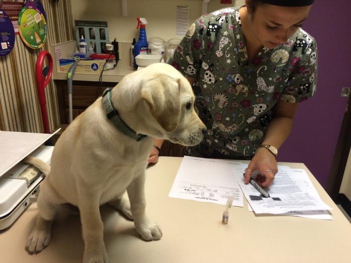 062316 vet visit