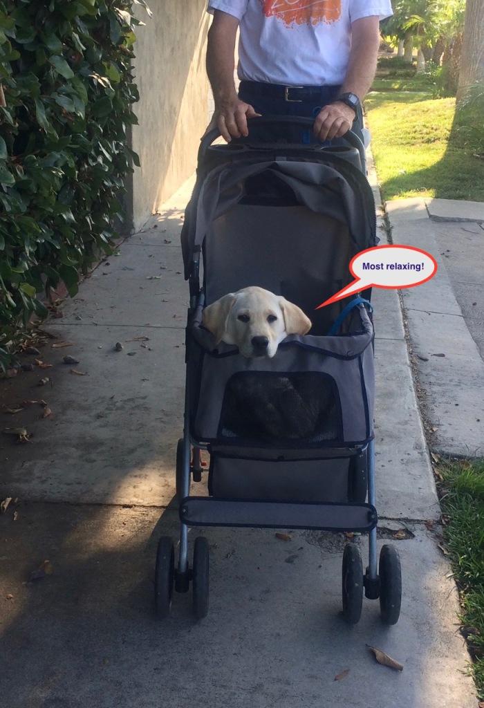 071116 Lazy stroller