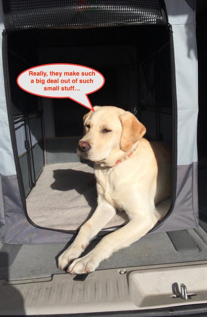 112716-van-dog