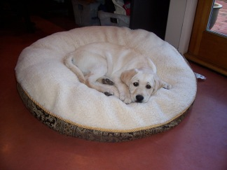 Tucker's new bed 3505