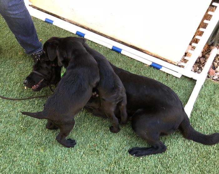 011418 puppy social2