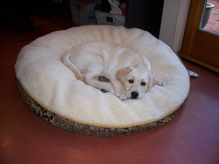 Tucker's new bed 3505.jpg